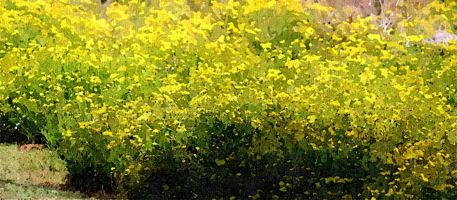 花も咲き乱れ